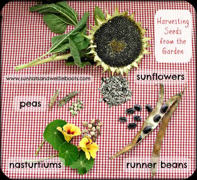 http://www.sunhatsandwellieboots.com/2013/10/harvesting-seeds-from-garden.html