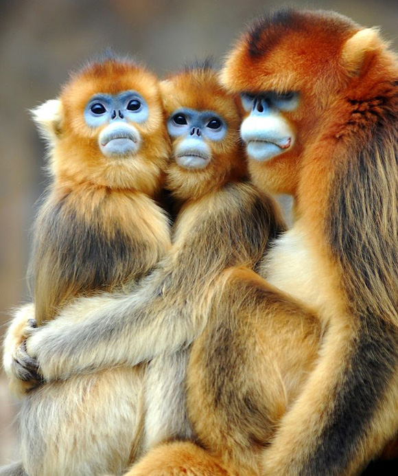 colored monkeys