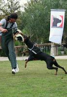 Doğru eğitimle, köpeğinizin içindeki koruyucu meleği ortaya çıkarın!