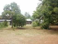 Suasana Kampung ,di kelilingi pokok durian dan rambutan....