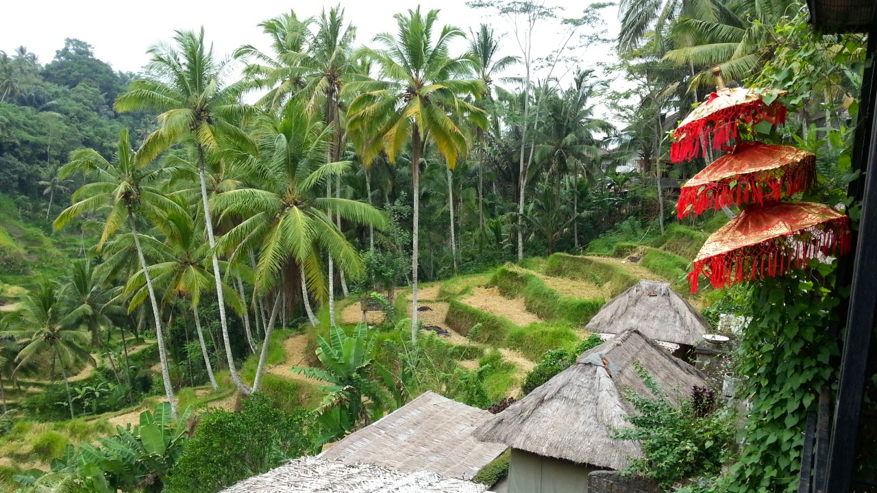 ubud single guys Online personals with photos of single men and women seeking each other for dating, love, and marriage in ubud.