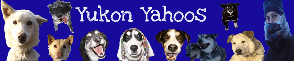Yukon Yahoos