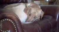 Dog Cozy