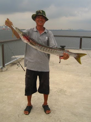Barracuda also know as Saw Kun 沙君 or Ikan Kacang weighing 4kg plus Caught by Me at Woodland Jetty on 5tht Auguat 2012