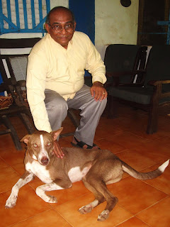 Brownie Lost Rescue Dog Goa