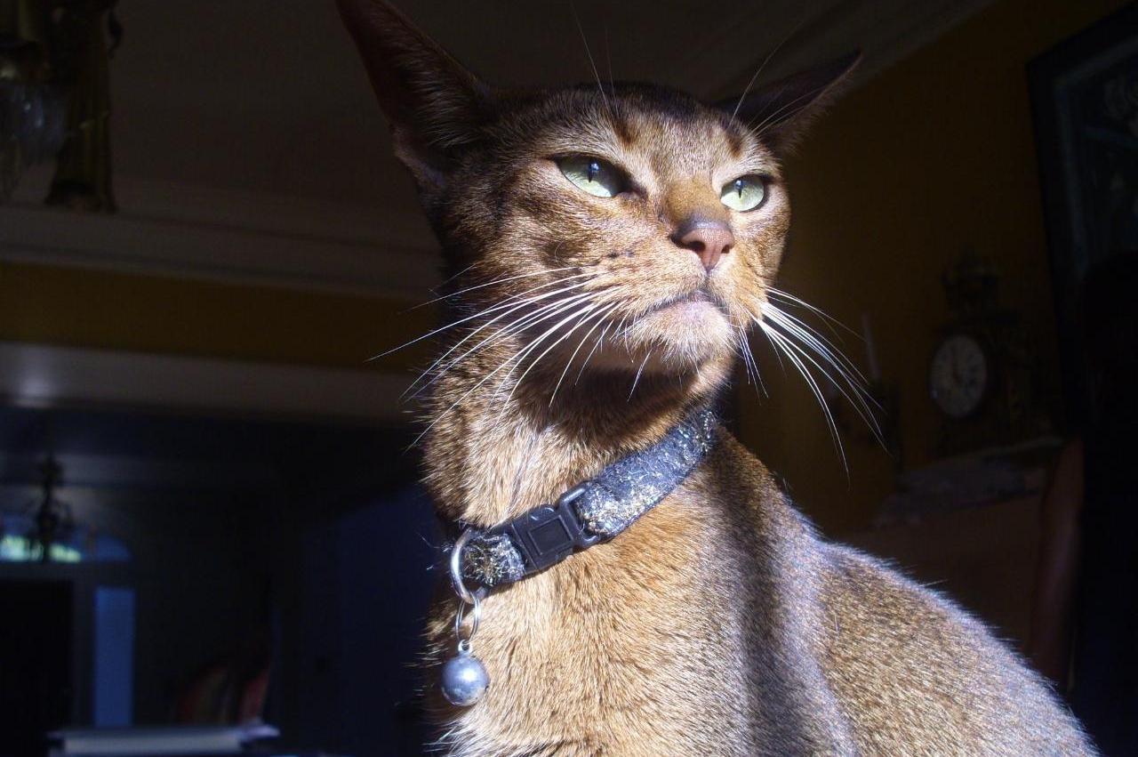 На фото альфа-кот