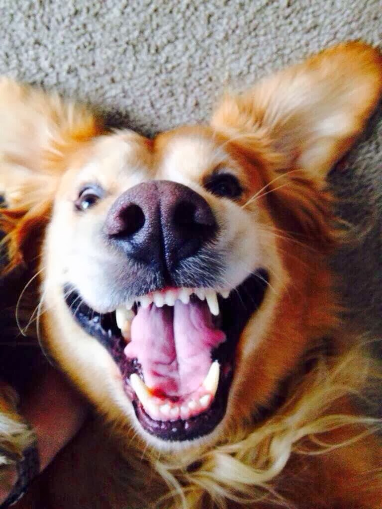 Cute dogs - part 3 (50 pics), dog with happy face