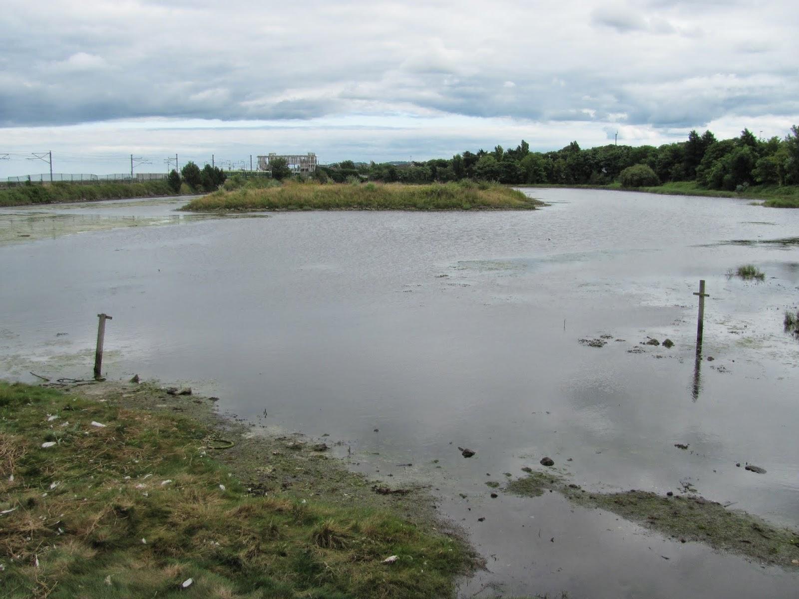 Beautiful Salty Mud Booterstown Marsh Dublin, Ireland