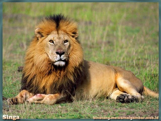gambar binatang buas singa