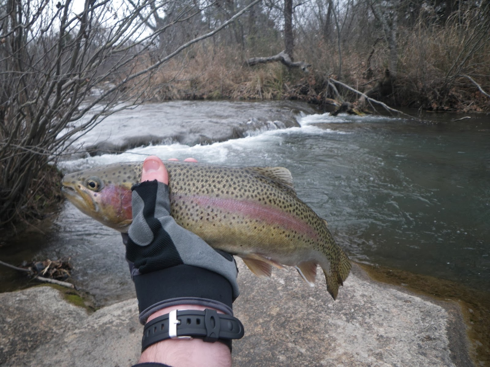 how to catch rainbow trout in a river