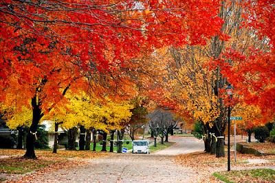 changing of seasons, fall, autumn, summer, winter, music