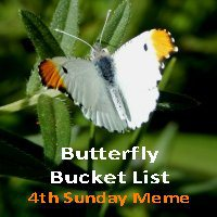 Butterfly Bucket List
