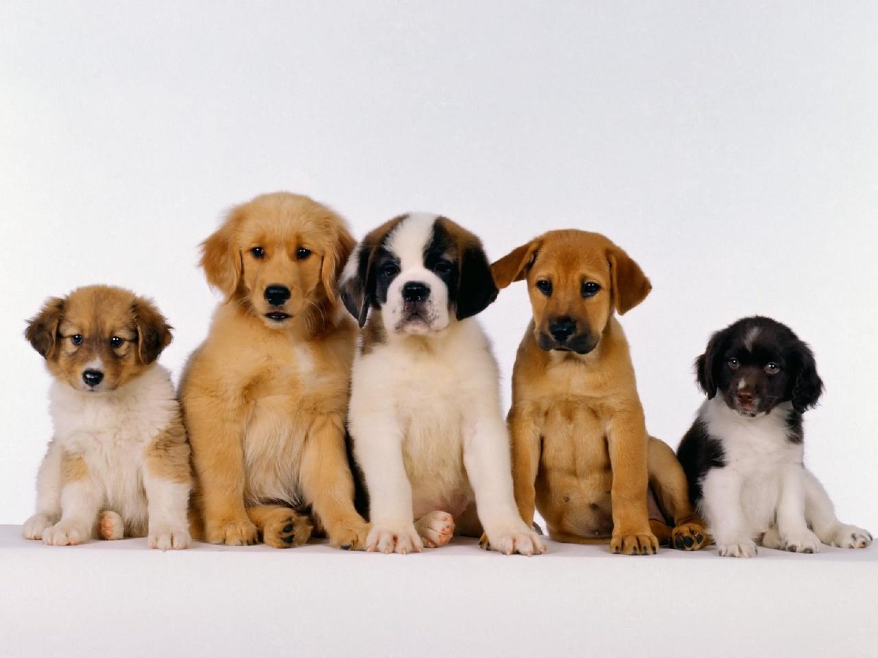 Na Trilha do Castelo: Como acabar com carrapato em cachorro!...