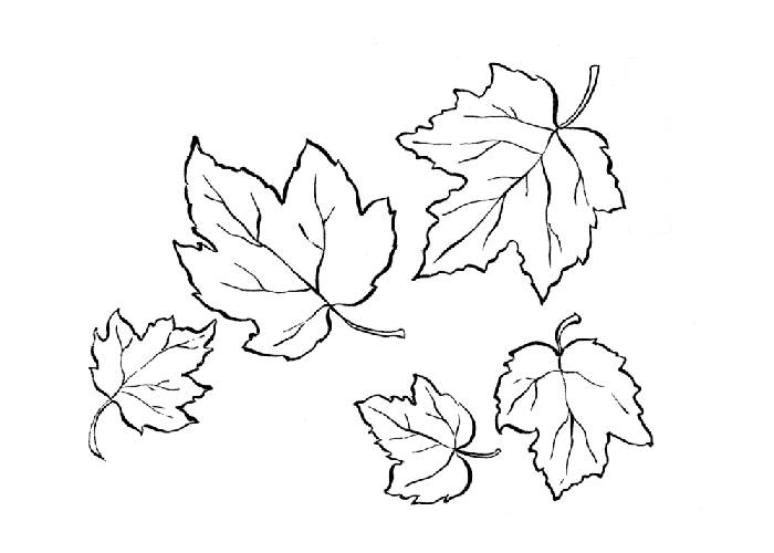 Free Coloring Pages Of Autumn Leaves Fall Leaves Color Pages