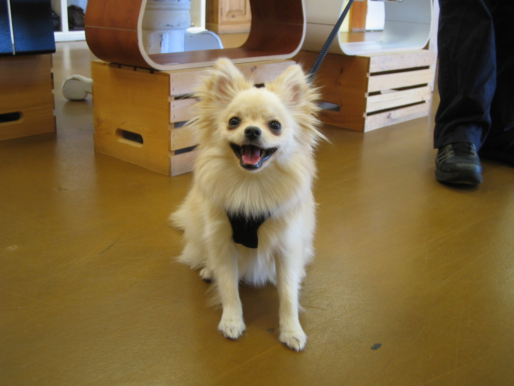 ... pictures of breeds of dogs family friendly dog breeds pictures of