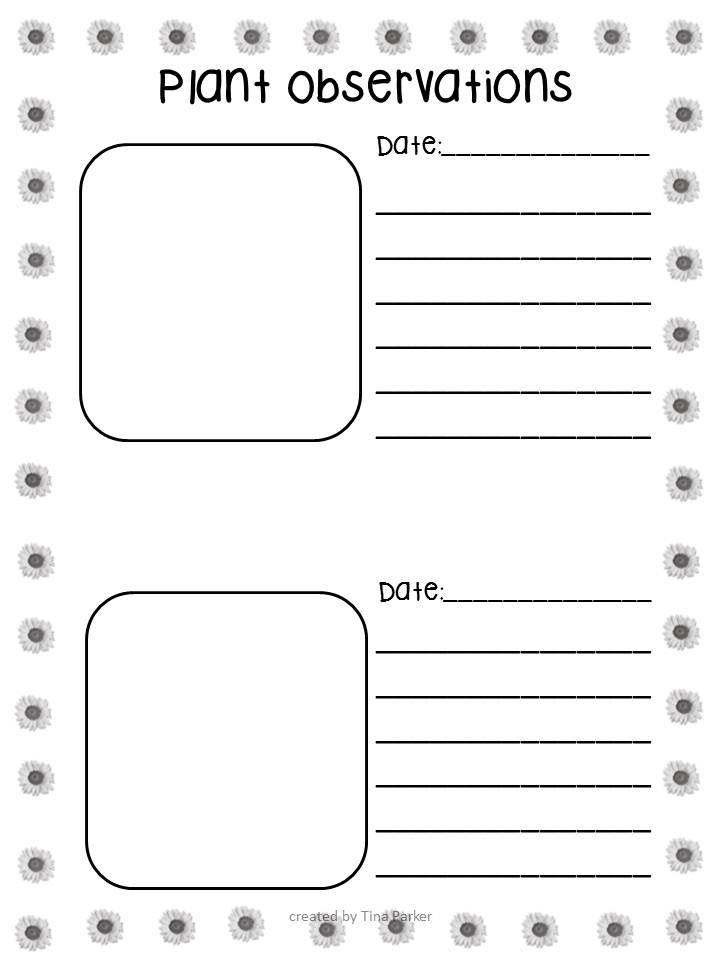 first grade plant observation worksheet first best free printable worksheets. Black Bedroom Furniture Sets. Home Design Ideas