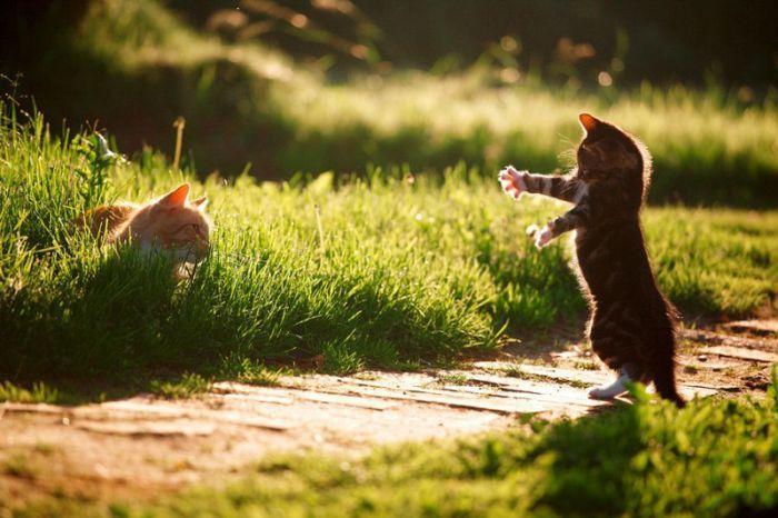 Фото 3 из Catmoji - социальная сеть для котов