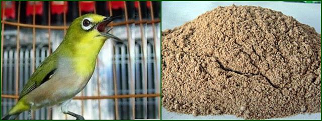Membuat EF Tepung Udang untuk Ciblek dan Pleci