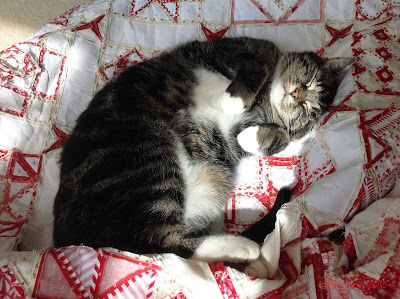 'Suzi the cat' - Pets on Quilts Show 2015