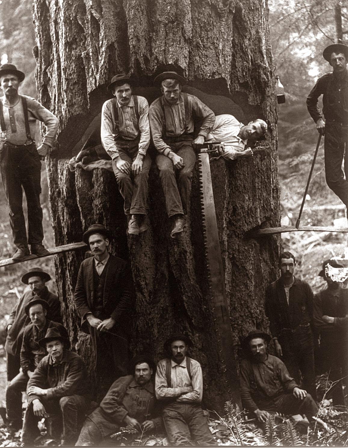 Výsledek obrázku pro lumberjack
