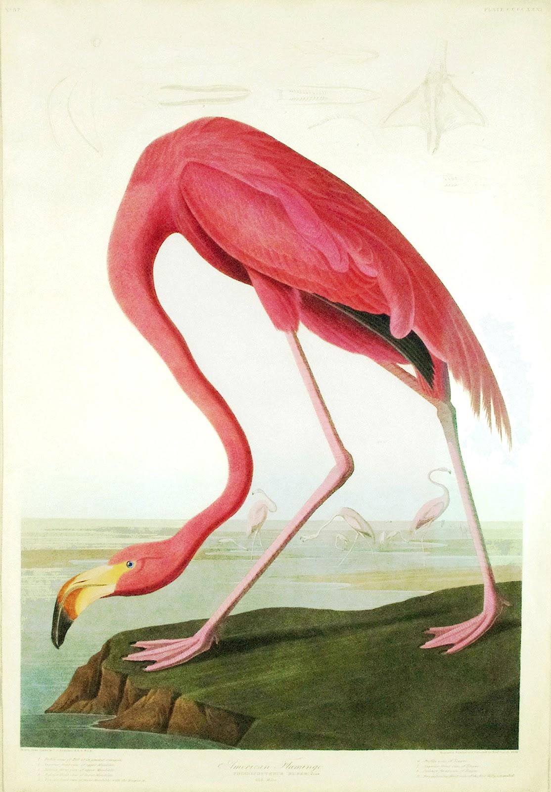 Graham Arader Audubon 39 S Monumental Testaments To American