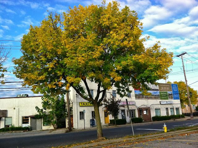 Yellow-Door-with-Autumn-Tree