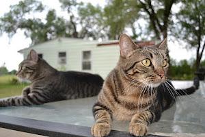 Mr. Kitty & Steven