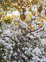 plum tree