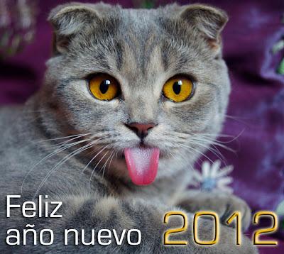 Feliz Año Nuevo 2012 (lindo gatito) - funny cat