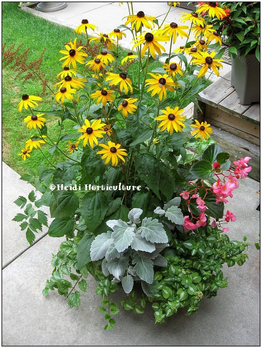 Heidi horticulture planter designs plant combinations that work - Best flower combinations for containers ...