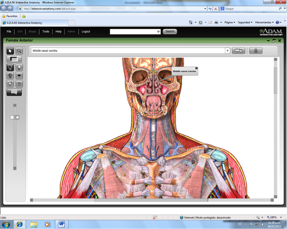 Charmant Adam Online Anatomie Zeitgenssisch Menschliche Anatomie