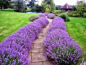 Giardino o balcone ecco le piante contro parassiti mosche - Rimedi contro le zanzare in giardino ...