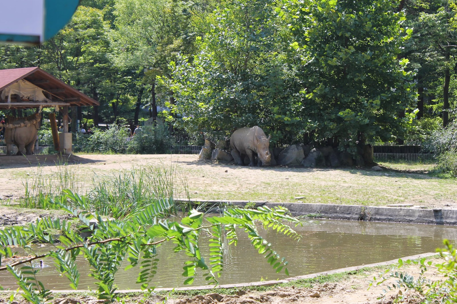 Seoul Zoo, Seoul, зоопарк в сеуле, сеул, корея, зоопарк, носорог
