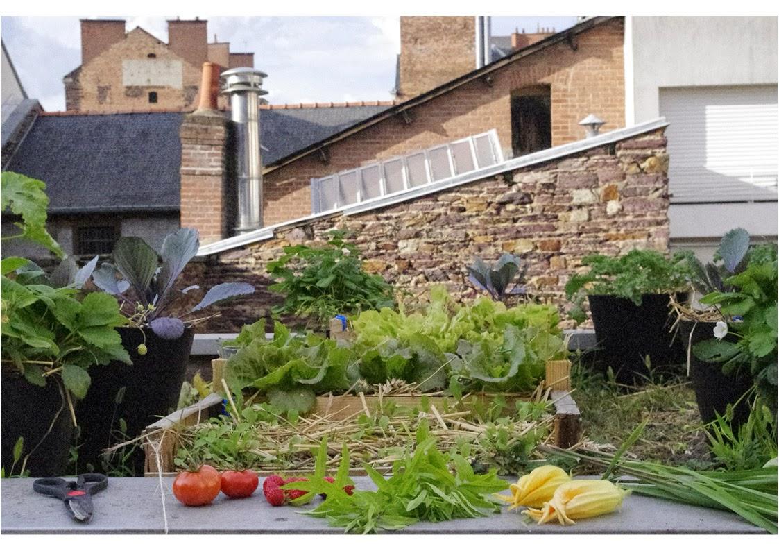 B.ponics rennes bretagne +jardin+urbain bac potager toit rooftop garden city farm+B.ponics 09/14