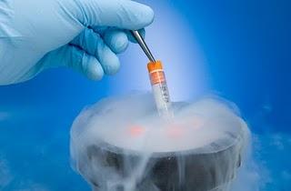 Gravidez, congelamento embriões, crio preservação, criopreservação, embrião congelado