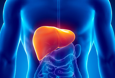 Clean the liver to lose weight