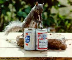Wait...it's buy one, get one free for squirrels today !!!