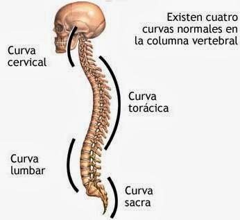 Sheynyy la osteocondrosis y la circulación de la sangre cerebral