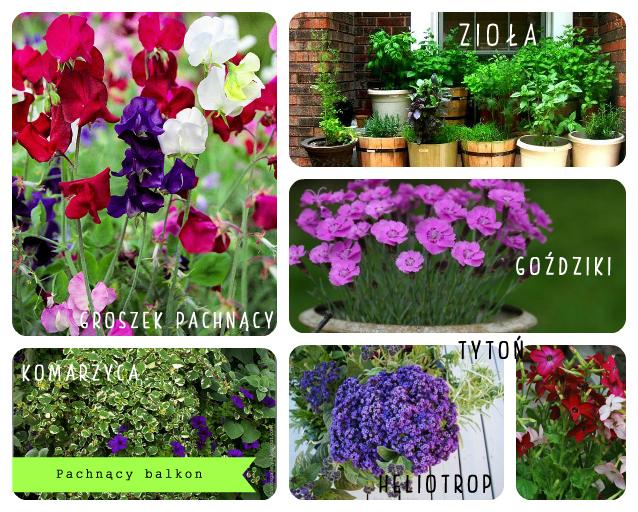 Its So Easy Diy Blog Pachnące Kwiaty Na Balkonie