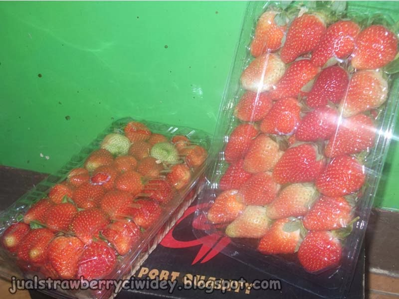 jual strawberry pack jumbo