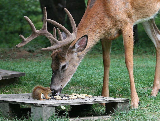 deer and squirrel eating together, funny animal pictures of the week