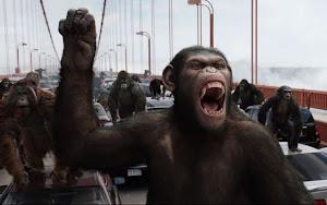 Macaco Não Mata