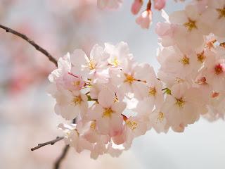 Фоны: «Весна в окно стучится»