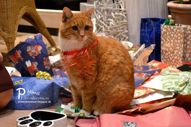 Mimi bekommt einen Futternapf zu Weihnachten geschenkt