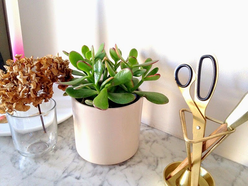 styling the seasons money plants and gold