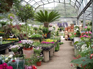 Plant Nursery Business