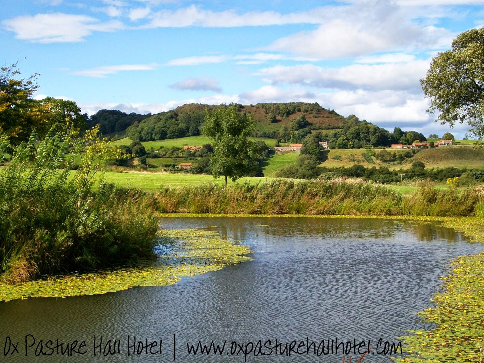 Lake at Raincliffe Woods in Scarborough   Anyonita-nibbles.co.uk