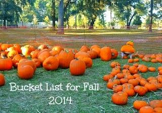 pumpkins, pumpkin patch, autumn