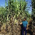 Corn & Ethanol