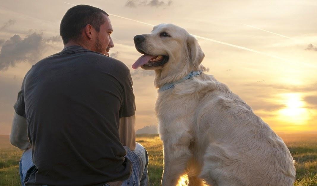 Cómo saber si mi perro me quiere: cuidados y nombres para tu mascota. Perro y dueño
